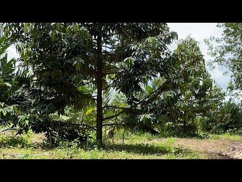 สวนลุงเลิศไลฟ์-Ep.2-การดูแลทุเ