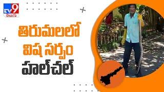 Tirumala : తిరుమలలో విష సర్పం హల్చల్ - TV9 - TV9