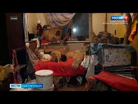 Вести Санкт-Петербург. Выпуск 9:00 от 21.07.2021