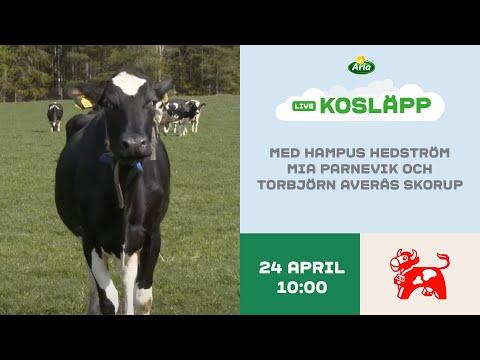 Arla Kosläpp LIVE - Lördag 24 april 2021
