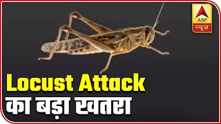 Locust attack: Why aren't we able to to end the crisis? - ABPNEWSTV