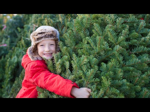 Cover photo for Homegrown | Caring for Your Christmas Tree