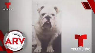 Secuestran a un perro y piden una recompensa para su rescate   Al Rojo Vivo   Telemundo