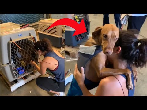 Dog Hugs and Doesn't let go of Owner on Reuniting With Her After 3 Months