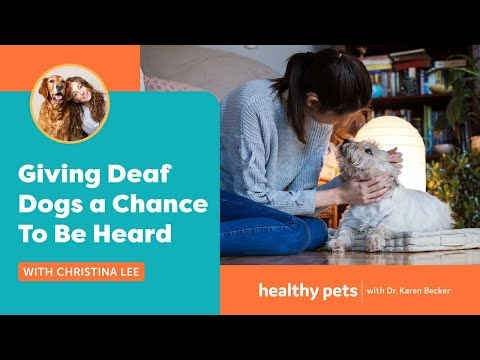 Giving Deaf Dogs a Chance To Be Heard   With Christina Lee