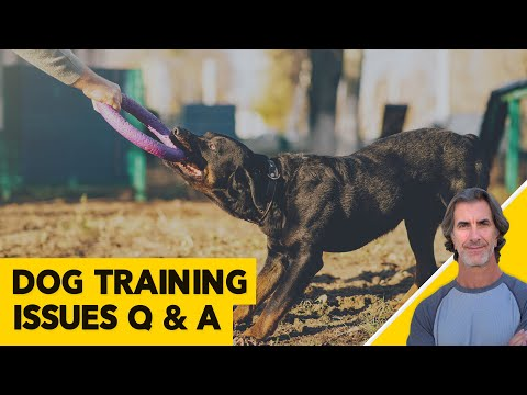 Dog Chewing Issues, Leash Issues and Dog Training Questions - ask me anything about dog training