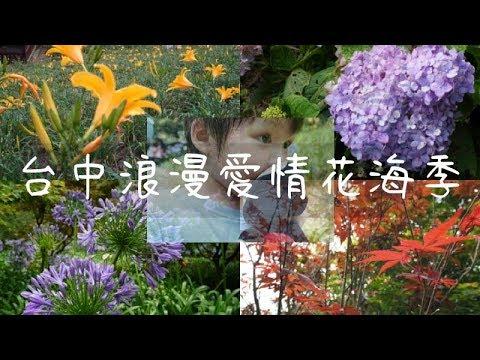 台中後花園新社山城繡球花金針花花海季   蔡劭TsaiShau