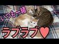 【天使】3匹で固まって寝る猫たちが可愛すぎる!!