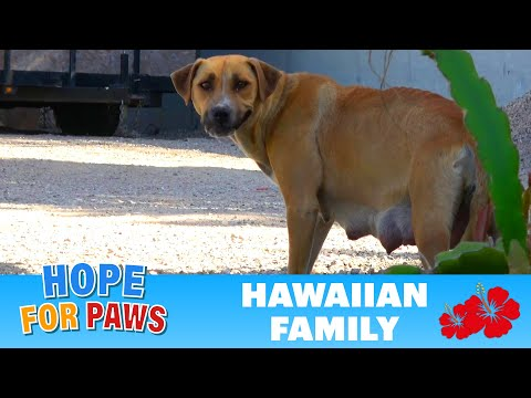 We were told this homeless dog had 4 puppies - we found more!!!  :-)