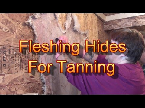 Scraping  Hides For Tanning! You Learn As We Do!
