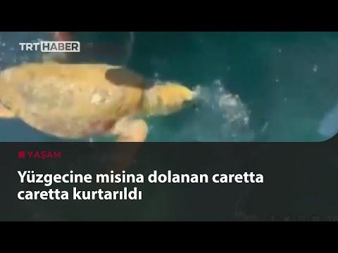 Deniz kaplumbağasının imdadına hayvanseverler yetişti