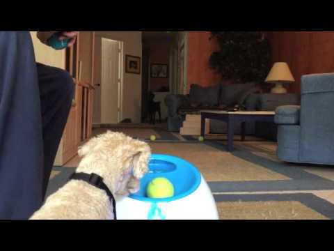 Indoor Play with IFetch