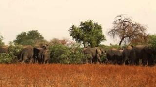 Elephant herd Zakouma National Park Chad