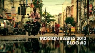 Mission Rabies Blog 3 - Madurai