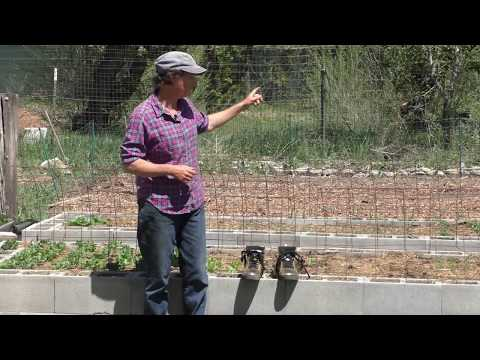 Adventures in High Performance Gardening | Week 7