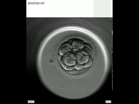 embryos2