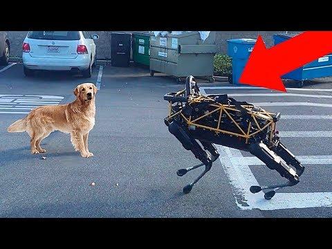 10 Реалистичных Роботов Животных, Которых Вы Должны Увидеть