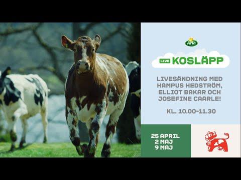 Arla Kosläpp LIVE - Lördag 25 april 2020