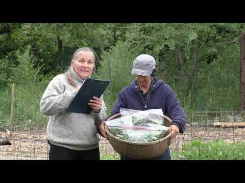 Adventures in High Performance Gardening | Week 10