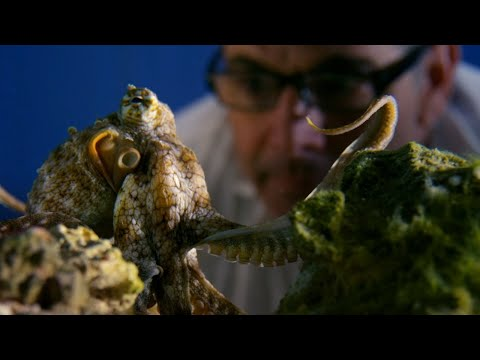 Can Octopuses Recognise People? | Octopus In My House | BBC Earth