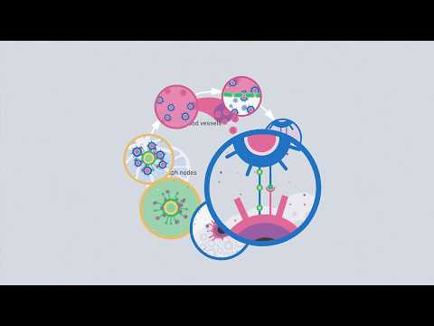 The Cancer Immunity Cycle – A description of how the immunsystem fights cancer