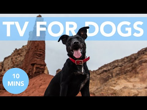 Thunderstorm Distraction TV for Dogs! Quick Anxiety Relief!