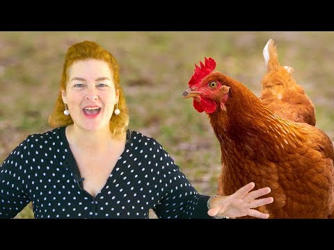 5 Things To Feed Your Chickens So They Lay Eggs All Year