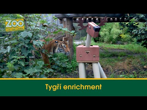 Tygří enrichment