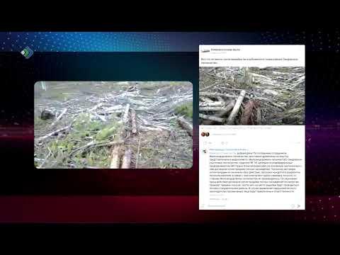 Газета «Выль туйод» поделилась в сети видеозаписью с Синдорского лесничества