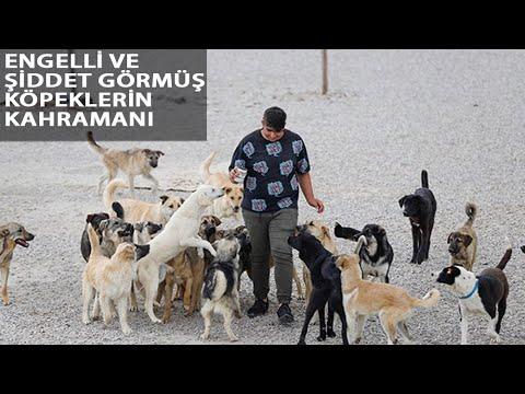 Liseli Berzan, Sokak Köpeklerine Yuva Kurdu