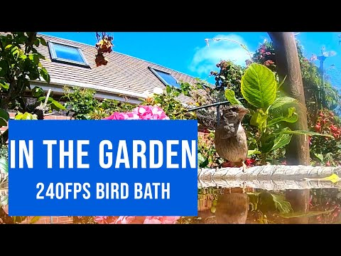 Click to view video Slow Motion on the bird bath