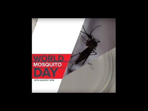 World Mosquito Day 2018