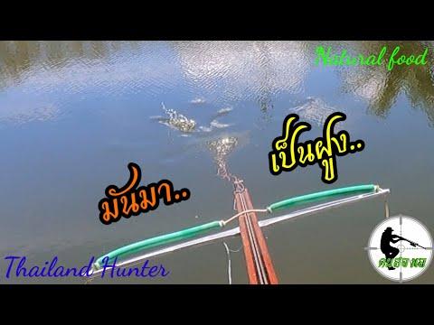 #SHOOT-FISH-ยิงปลาเป็นฝูง-จะได