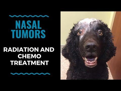 Pet Radiation & Chemo Treatment For Nasal Tumors: VLOG 118
