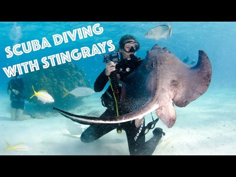 Scuba Diving With Stingrays!