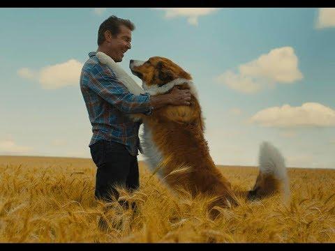Tu mejor amigo: Un nuevo viaje - Trailer español (HD)