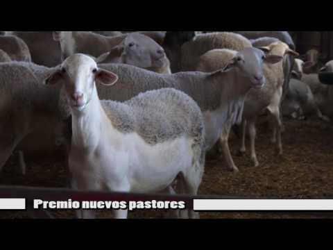 Granja Piedra Soc Coop: Premio Nuevos Pastores 2016