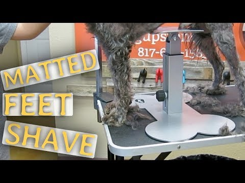Really Matted Feet Aggressive Dog Groom