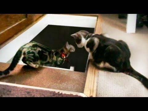 Video: Draugą - nelaimėje pažinsi.