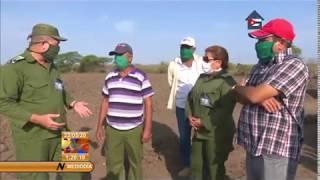 Siembra de arroz, prioridad para la Empresa Granos Ruta Invasora en Camagüey