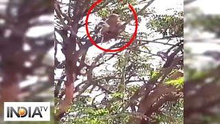 Monkeys run away with blood samples of suspected COVID-19 patients in Meerut - INDIATV