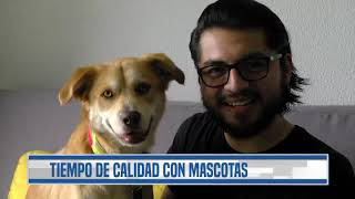 Mascotas afectadas por el confinamiento a causa del Coronavirus en Guatemala   Guatevisión