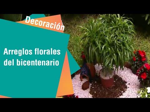 Ideas para celebrar el bicentenario con plantas   Ideas