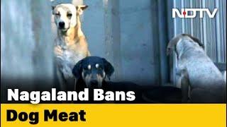 Nagaland Bans Dog Meat After Uproar On Internet - NDTV