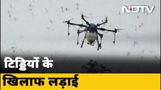 ड्रोन-हेलीकॉप्टर से टिड्डियों पर वार, भारत में कई राज्य हुए हैं प्रभावित - NDTVINDIA