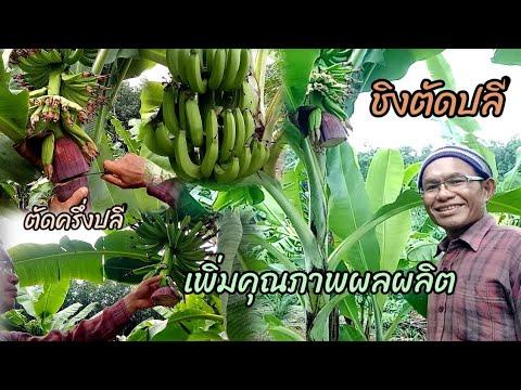 วิธีตัดปลีกล้วยแบบชิงตัด(ตัดคร