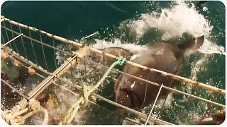 Shark Cage Nearly Breaks   Crazy Shark Video
