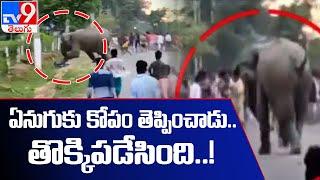 ఏనుగుకు కోపం తెప్పిస్తే అంతే మరి..! - TV9 - TV9