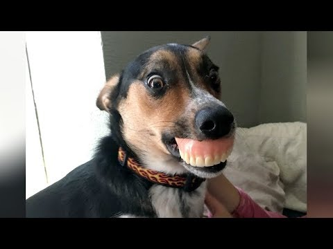 connectYoutube - DOGS & PUPPIES - NOTHING will make you LAUGH HARDER