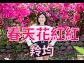[首播] 羚均 - 春天花紅紅 MV